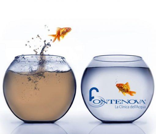 Immagine di un pesciolino che sceglie di tuffarsi in acqua potabilizzata